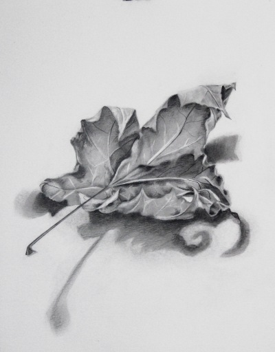 driedleafdrawing