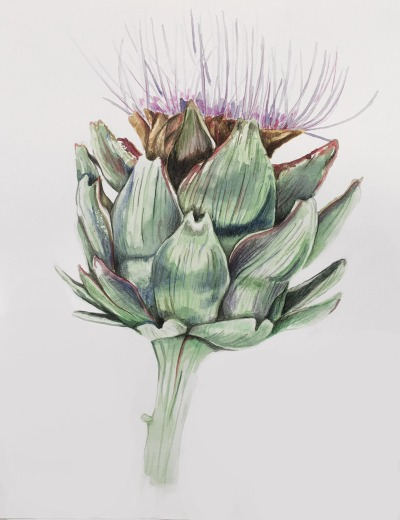 """Phillip Potter """"Cyrara scolymus""""2017 watercolor and colored pencil on paper"""